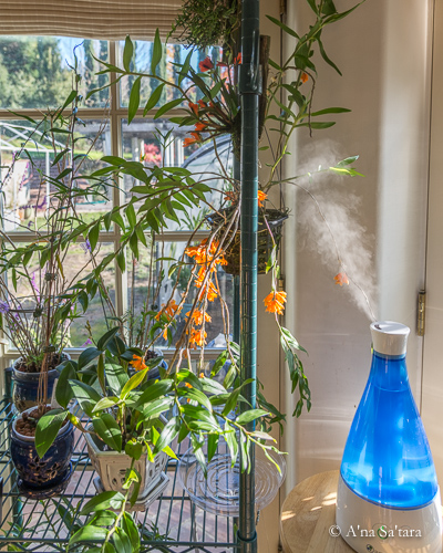 Ultrasonic humidifier for orchids
