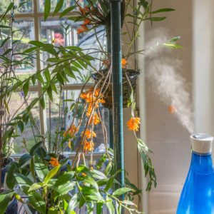 Indoor Humidity for orchids
