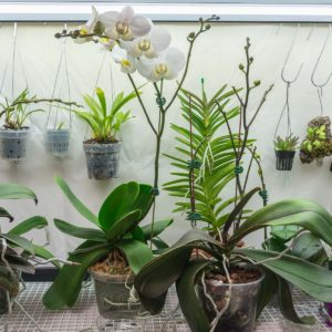 Top shelf of orchid growing area