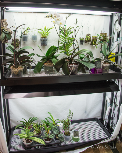 Two shelf growing area under fluorescent lights