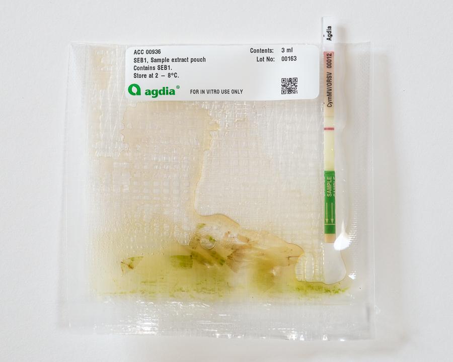 Orchid virus test CymMV ORSV